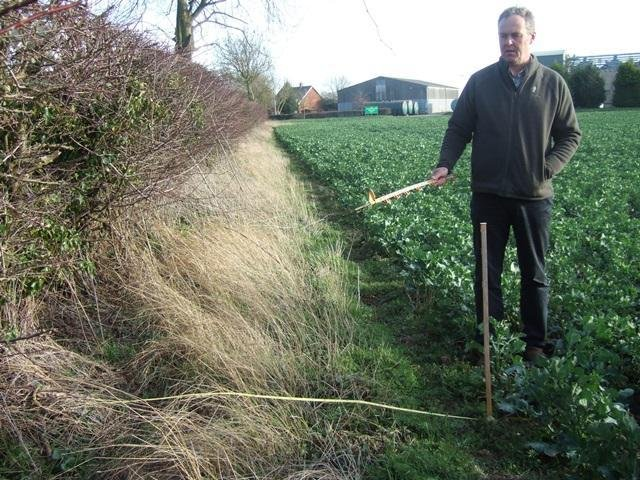 Volunteers are needed to explore hedgerows.