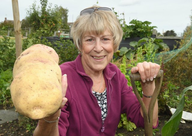 Sharon Marlow of Sleaford with her 1.22kg potato that she has grown . EMN-200914-094050001