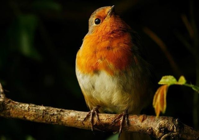 'Spotlit Robin' by young photographer Katy Read. EMN-200929-172648001