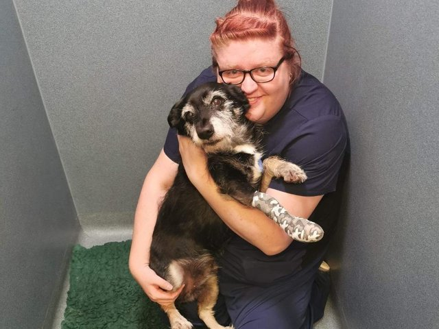 Alana Taylor, vet nurse at Vets Now emergency clinic in Lincoln