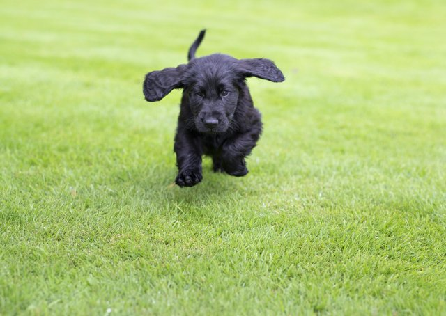 Celebrate National Puppy Day on March 23. Picture: James Robinson/The Kennel Club. EMN-210322-120444001