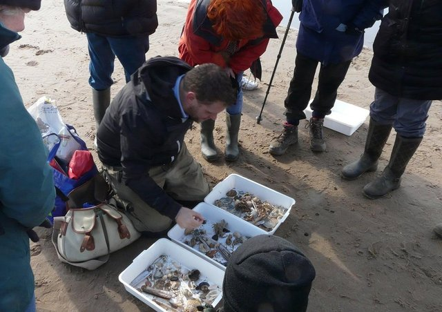 Dr Jack Sewell of the Marine Biology Association, looking at the biodiversity of the beach north of Mablethorpe with the Bell Beach Biology citizen science group.