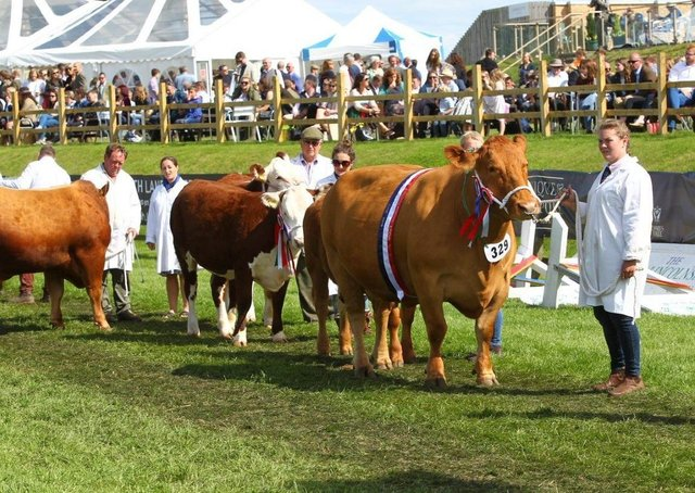 Fatstock parade is the highlight of the Lincolnshire Show