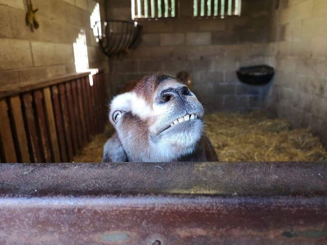 Wolds Wildlife Park is  keeping in touch with regular videos of the animals.