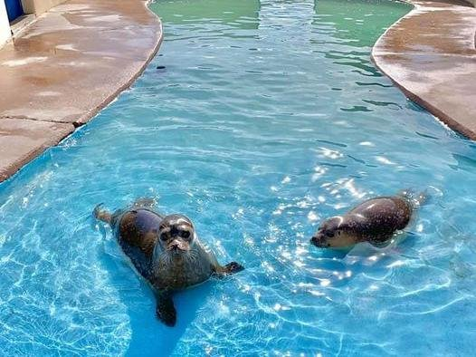 The seals at Skegness Natureland are looking forward to welcoming visitors.