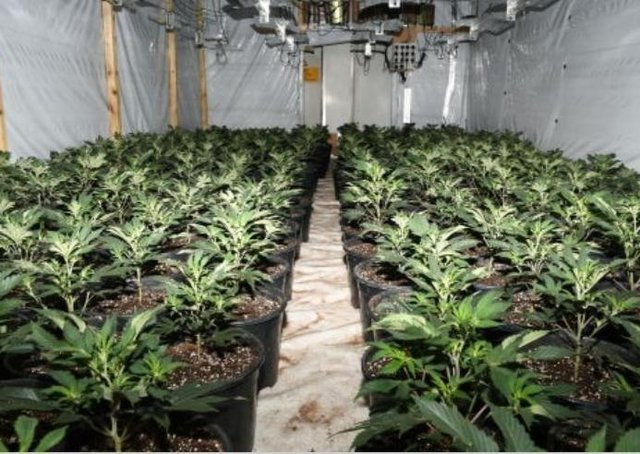 Inside the factory - the latest police discovery of a £6m cannabis grow in Frampton. EMN-210427-171700001