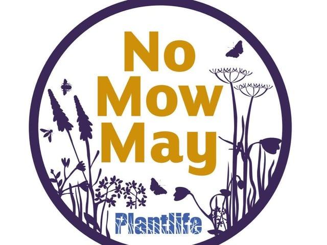 No Mow May.
