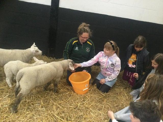 Farm School at St Georges Prep