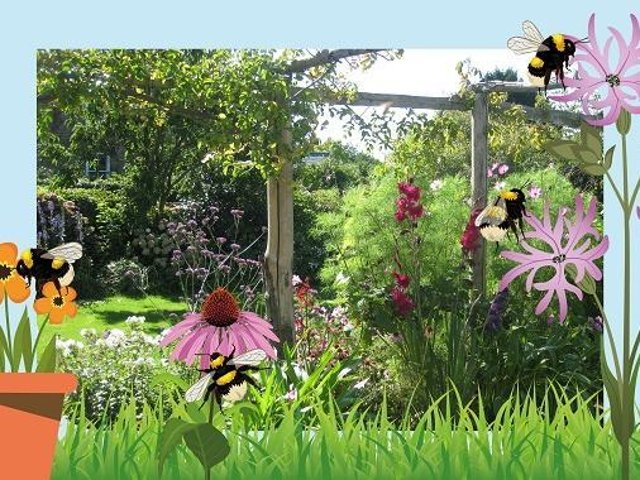 The Bumblebee Conservation Trust is launching a new competition – Pollin-8.