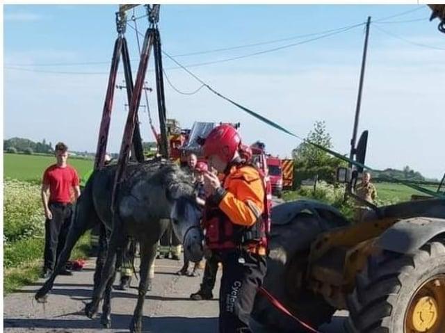 Horse rescue in Wainfleet.