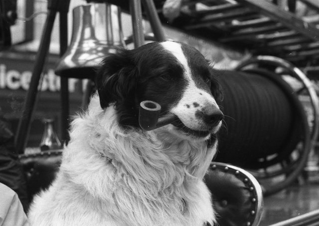 Pipe-fan Sam the Collie.