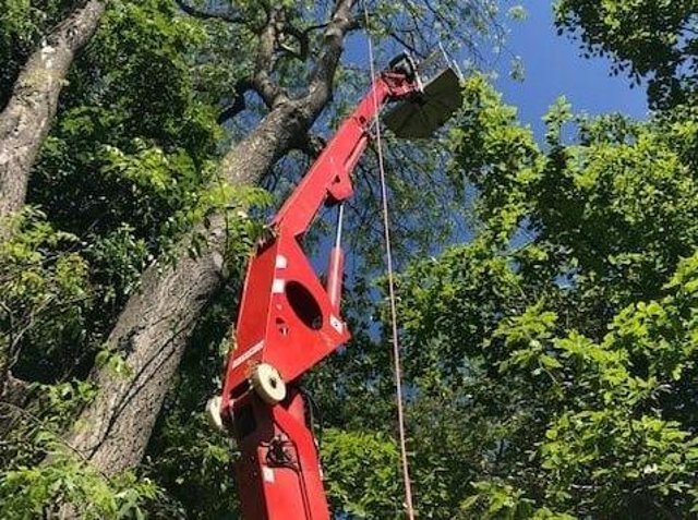 Tree management work is being carried out in the woodland areas at Coronation Walk and Vine Walk in Skegness.