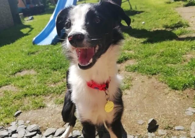 Sarah Drayton's puppy, Wilbur. EMN-210507-173030001
