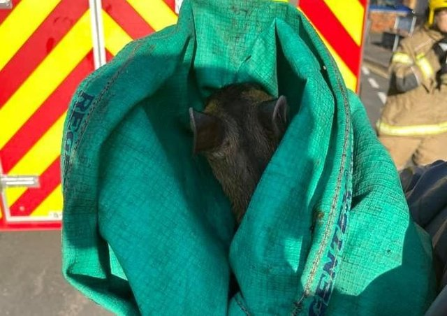 Lincolnshire Fire and Rescue released a trapped muntjac from a drain in Horncastle. Picture: John Taylor. EMN-210713-145009001