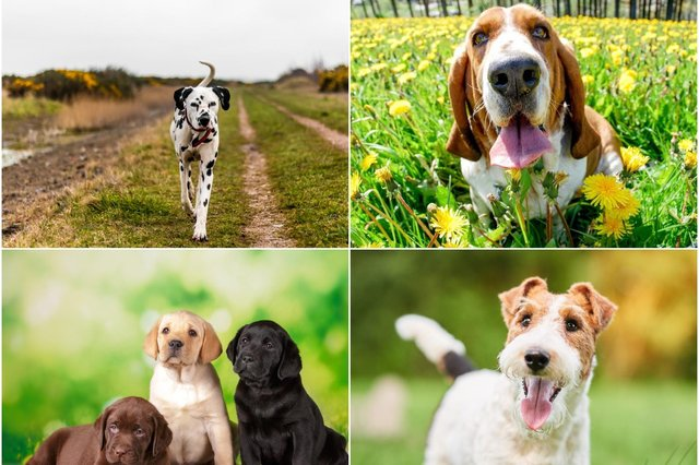 These are the top 10 cutest dog breeds, according to the research